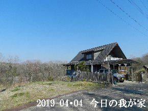 2019-04・04 今日の里山は・・・ (1).JPG