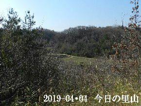 2019-04・04 今日の里山は・・・ (3).JPG