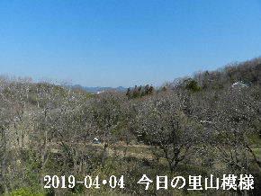2019-04・04 今日の里山模様・・・ (1).JPG