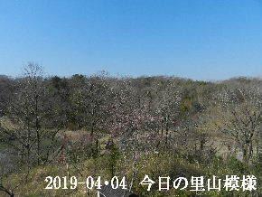 2019-04・04 今日の里山模様・・・ (3).JPG