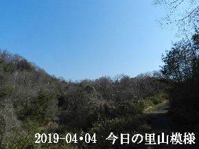 2019-04・04 今日の里山模様・・・ (4).JPG