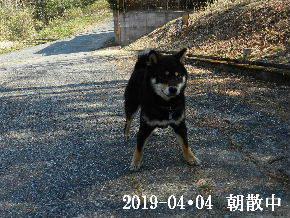 2019-04・04 今日の麻呂 (1).JPG