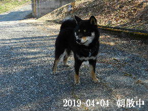 2019-04・04 今日の麻呂 (2).JPG