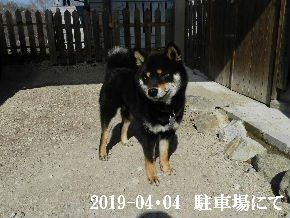 2019-04・04 今日の麻呂 (3).JPG