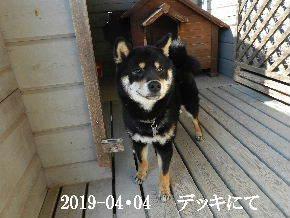 2019-04・04 今日の麻呂 (5).JPG