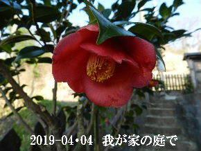 2019-04・04 我が家のスナップ・・・ (12).JPG