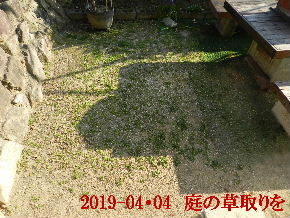 2019-04・04 我が家のスナップ・・・ (2).JPG