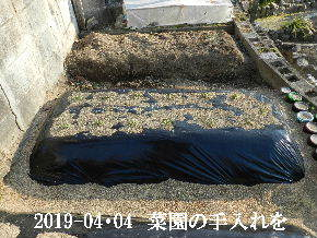 2019-04・04 我が家のスナップ・・・ (6).JPG