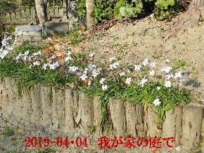 2019-04・04 我が家のスナップ・・・ (7).JPG