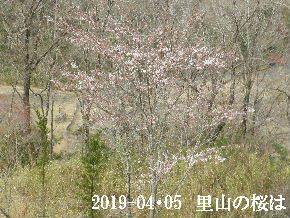 2019-04・05 今日の出遭い・・・ (1).JPG