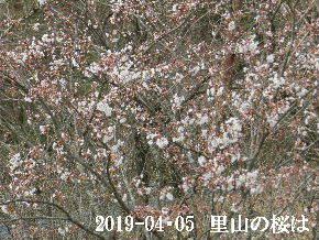2019-04・05 今日の出遭い・・・ (2).JPG