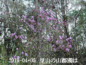 2019-04・05 今日の出遭い・・・ (3).JPG