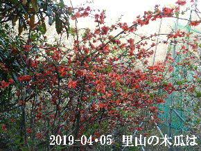 2019-04・05 今日の出遭い・・・ (4).JPG