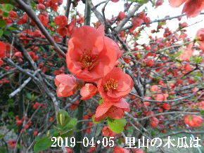 2019-04・05 今日の出遭い・・・ (5).JPG