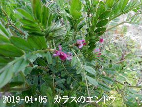 2019-04・05 今日の出遭い・・・ (7).JPG