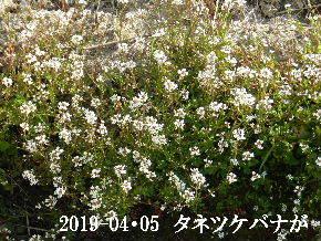 2019-04・05 今日の出遭い・・・ (9).JPG