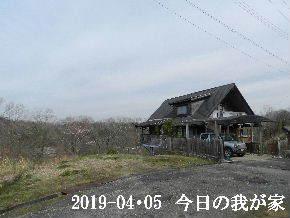 2019-04・05 今日の里山は・・・ (1).JPG