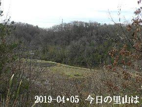 2019-04・05 今日の里山は・・・ (3).JPG