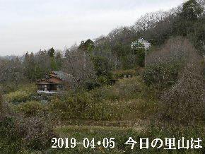 2019-04・05 今日の里山は・・・ (4).JPG