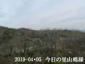 2019-04・05 今日の里山模様・・・ (2).JPG