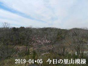 2019-04・05 今日の里山模様・・・ (3).JPG