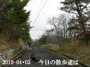 2019-04・05 今日の里山模様・・・ (4).JPG