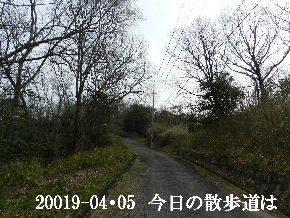 2019-04・05 今日の里山模様・・・ (5).JPG
