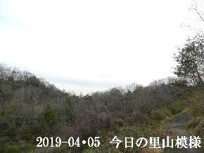 2019-04・05 今日の里山模様・・・ (6).JPG