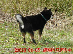 2019-04・05 今日の麻呂 (1).JPG