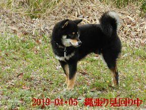 2019-04・05 今日の麻呂 (2).JPG