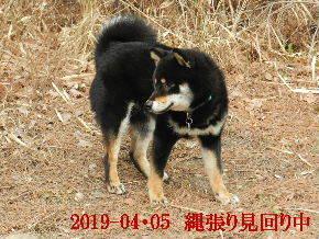 2019-04・05 今日の麻呂 (3).JPG
