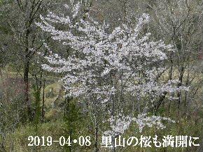 2019-04・08 今日の出遭い・・・ (1).JPG