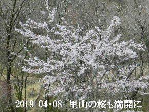 2019-04・08 今日の出遭い・・・ (2).JPG