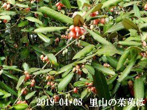 2019-04・08 今日の出遭い・・・ (4).JPG