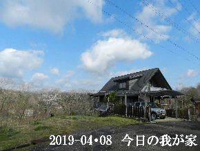 2019-04・08 今日の里山は (1).JPG