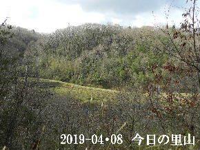 2019-04・08 今日の里山は (3).JPG