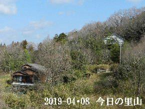 2019-04・08 今日の里山は (4).JPG