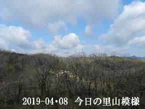2019-04・08 今日の里山模様・・・ (2).JPG