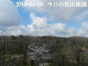 2019-04・08 今日の里山模様・・・ (3).JPG