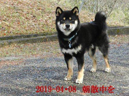 2019-04・08 今日の麻呂 (2).JPG