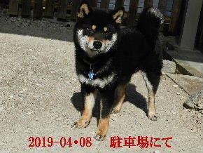2019-04・08 今日の麻呂 (4).JPG