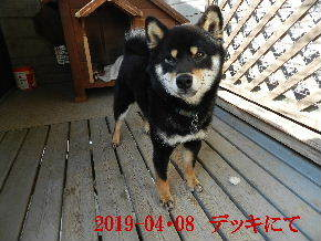 2019-04・08 今日の麻呂 (5).JPG