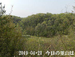 2019-04・21 今日の里山は・・・ (3).JPG