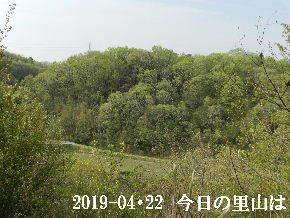 2019-04・22 今日の里山は・・・ (3).JPG