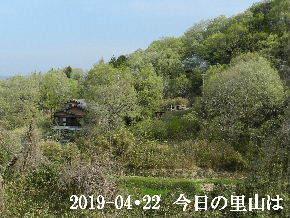 2019-04・22 今日の里山は・・・ (4).JPG