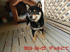 2019-04・22 今日の麻呂 (5).JPG