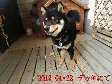 2019-04・22 今日の麻呂 (6).JPG