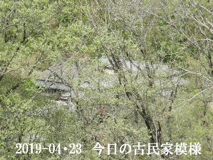 2019-04・23 今日の古民家模様.JPG