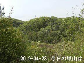 2019-04・23 今日の里山は・・・ (3).JPG