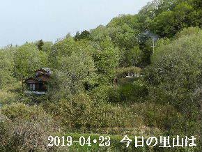 2019-04・23 今日の里山は・・・ (4).JPG